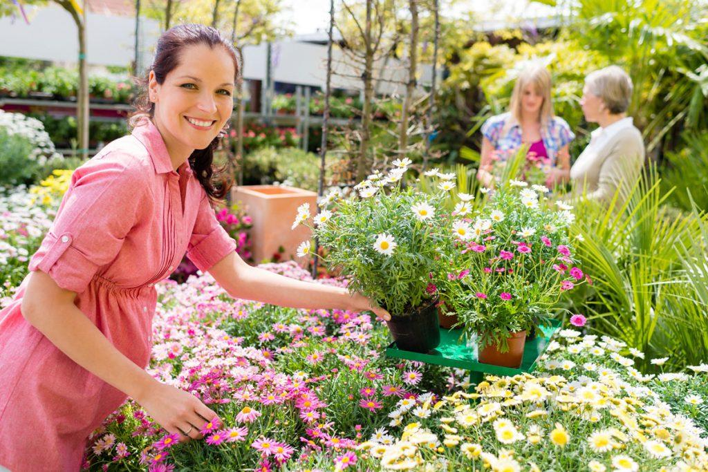 Bitkiler için bakım rehberi