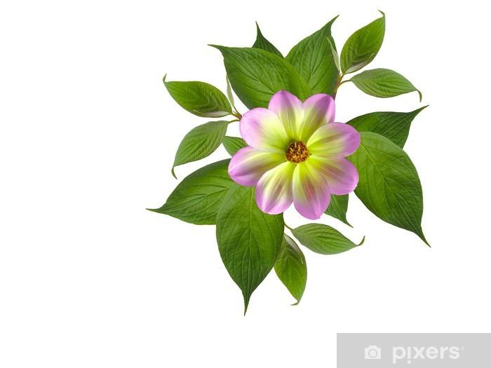 yapraklı bitki